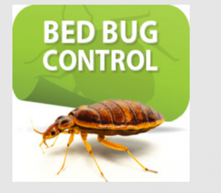 Bed Bugs Removal Brisbane