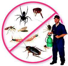 Fly and Mosquitoes Control Brisbane