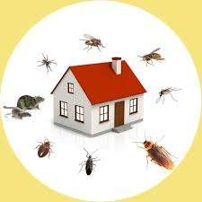 Pest Control Balwyn North