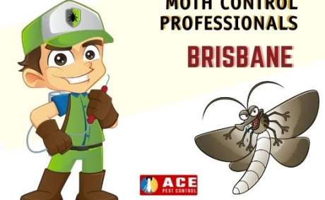Moth Extermination Brisbane